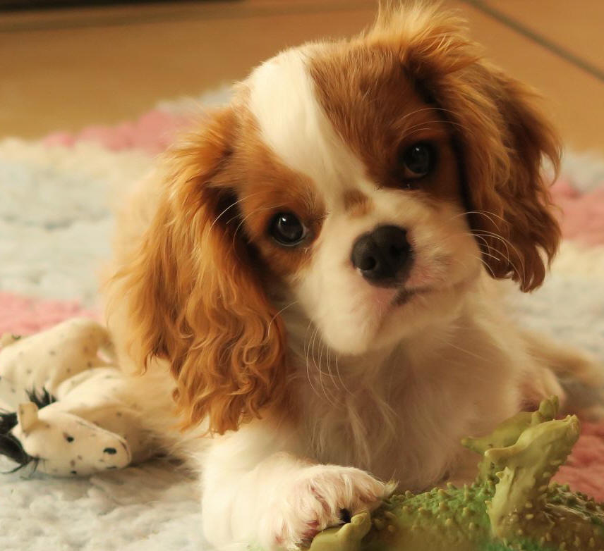 International Dog Breeds